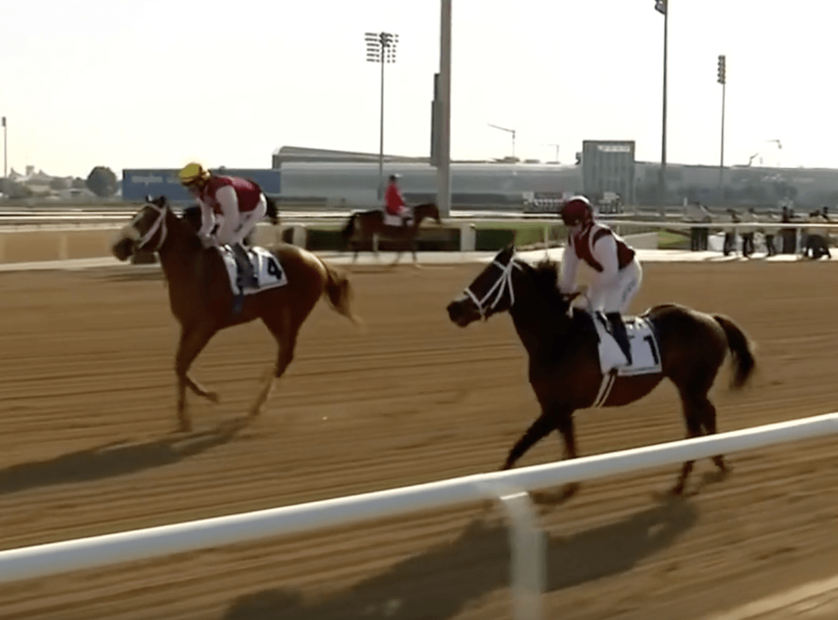 Стратегия ставок на лошадей